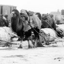 Верблюды на вокзале